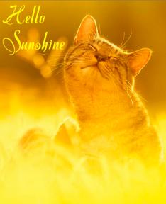 Image result for sunshine on my shoulders