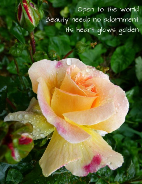 Open to the world Beauty needs no adornment Its heart glows golden