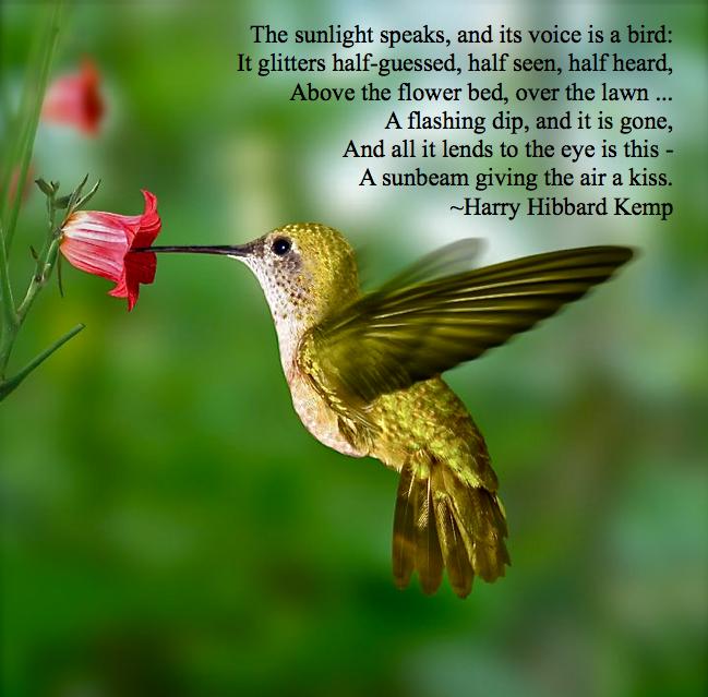 Hummingbird Sacred Touches