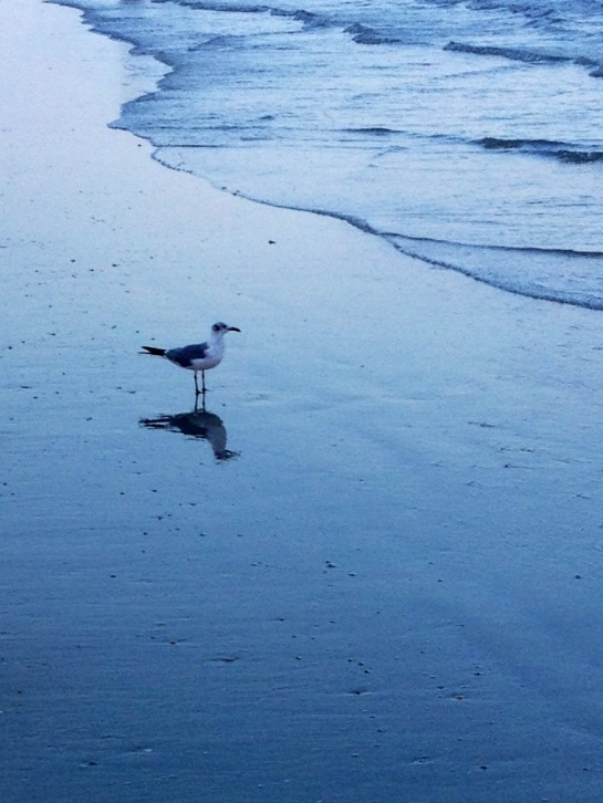 seagull reflected on the beach