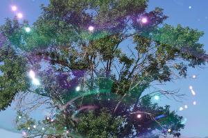 bubble-tree-ernie-echols