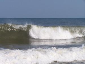 Oceans 262