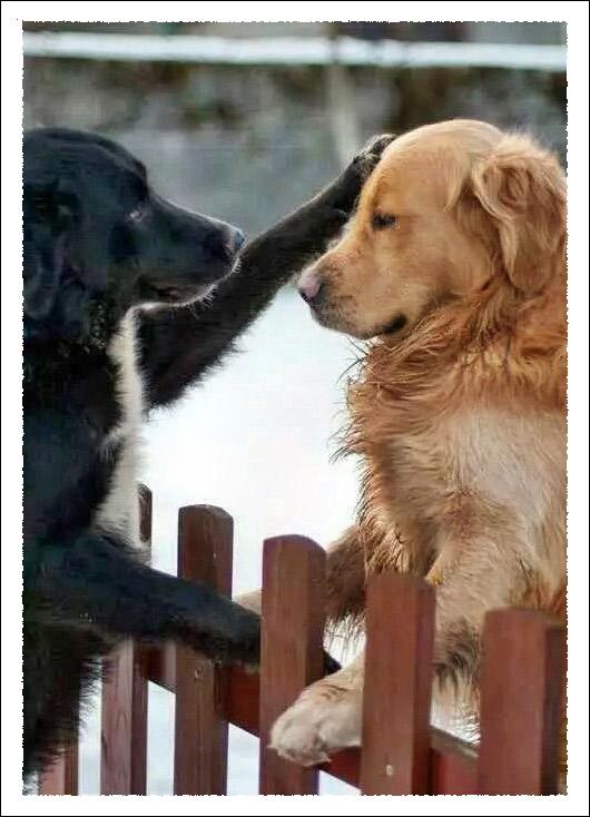 More-Than-Good-Friends