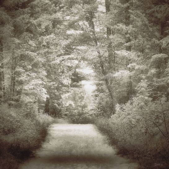sepia snow forest path bw ch IMG_9195
