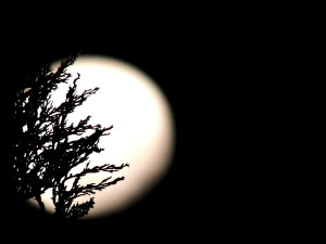 moon-544210_1280