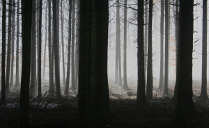 forest-1529055_1280