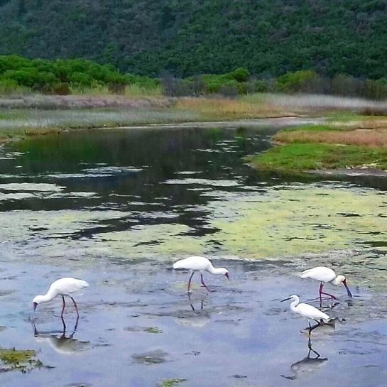 mystical wetlands.jpg